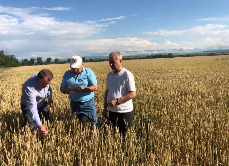 Дагестан первым в стране начал уборку зерновых